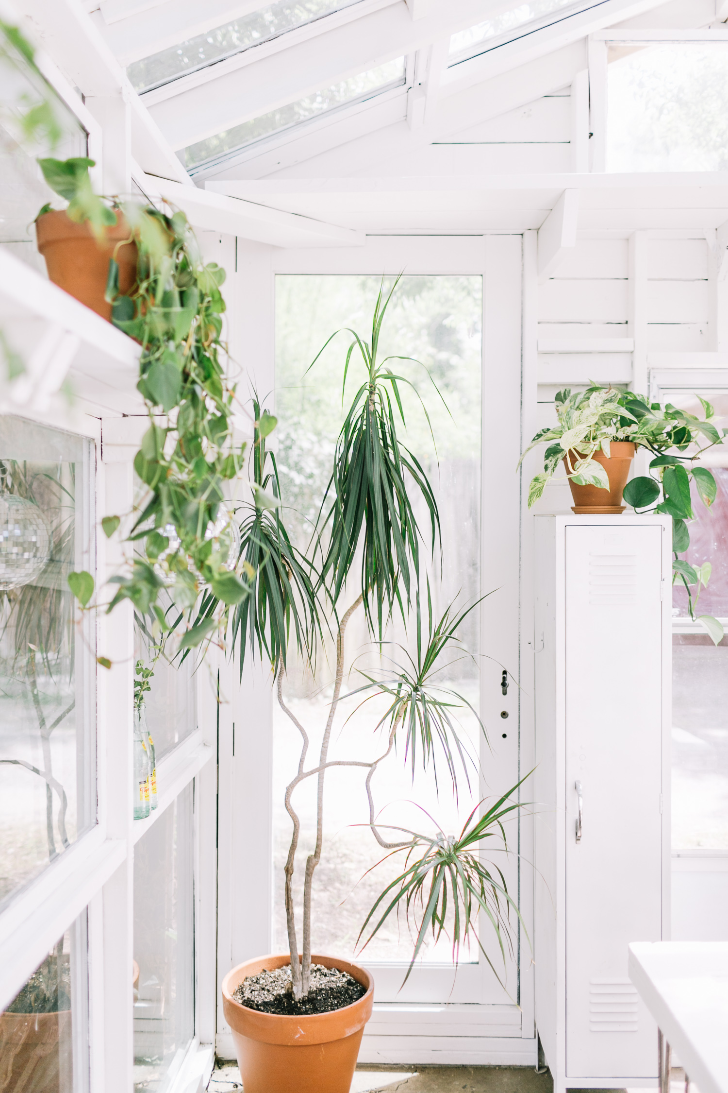 plant care tips & tricks